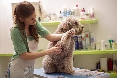 Groomer is cutting a dog hair in hair service Stockfoto
