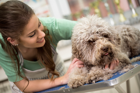 dog grooming: woman and grooming dog in hair service Stock Photo