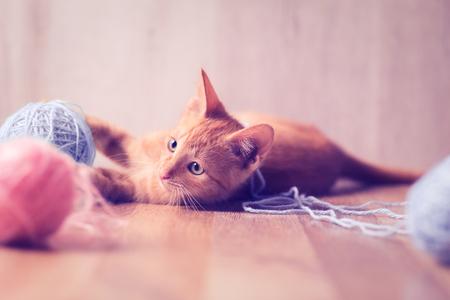 pequeño gato lindo jugar con bolas de lana
