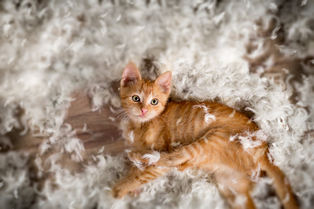 Little kitten playing with  feathers Stock Photo