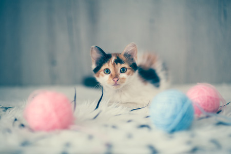 adorable pussy ball of  wool Stock Photo
