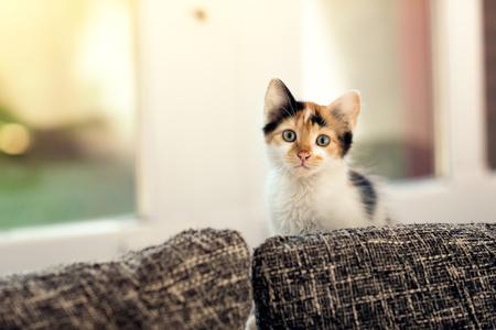 kittens sitting next window inside