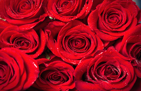 fresh red roses background close-up