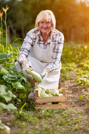 diligente: Older woman with organic produced zucchini in garden