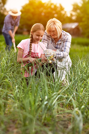 background person: Grandmother and granddaughter in garden with onion seedlings Stock Photo