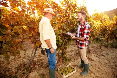 Vintner inspecting vine in vineyard, research vine concept