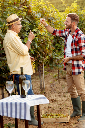Father and son controlling grapes before harvest- inspecting grape