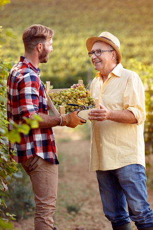 farmers harvesting grapes in vineyard - satisfied father and son Stock Photo