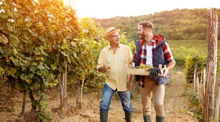Family in vineyard celebrating harvesting grapes- father and son