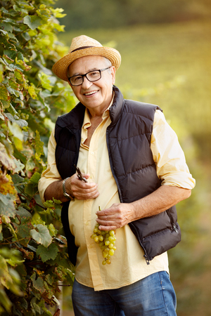 smiling winemaker harvest the grape at his family vineyard