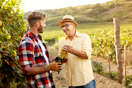 grape harvest-smiling father and son working at family vineyard