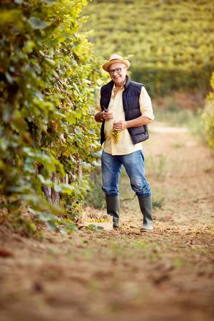 smiling winemaker in the vineyard Banque d'images