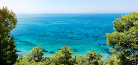 Natural beauty, landscape of sea pine trees Banque d'images