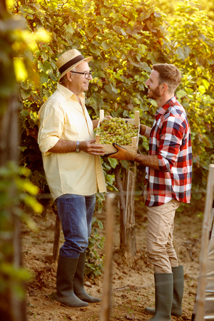 vineyard family tradition - happy father and son vintner looking at grapes Banque d'images