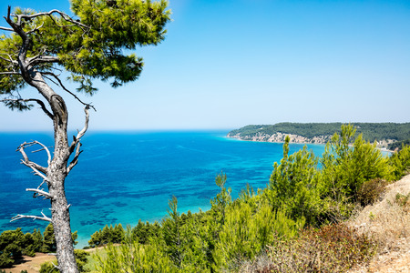 Landscape from Greece with seaside and pine tree Banque d'images