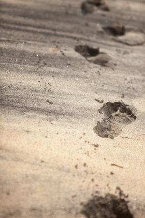 Footprints in sand of  wilderness beach Фото со стока - 105583823