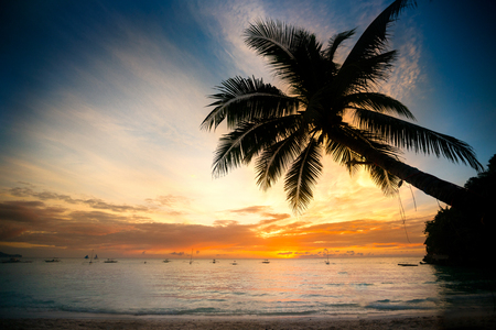 Shiny tropical landscape banner background. Coconut palm tree over blurry sunset ocean Imagens