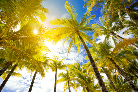 Palm trees low angle view