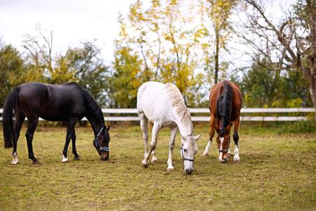 Three lovely horses together outside