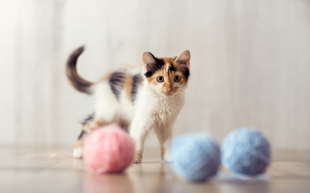 playing little cat with clews of  wool Standard-Bild - 107853150