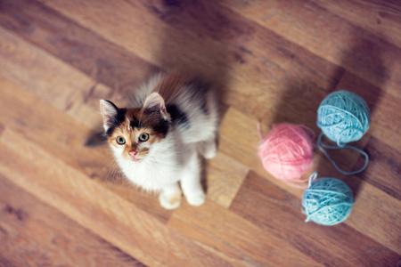 Cute little kitten, top view