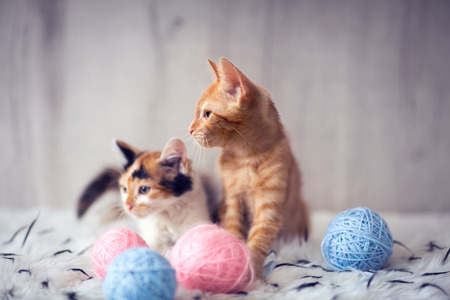 Two  kittens with clew wool playing together