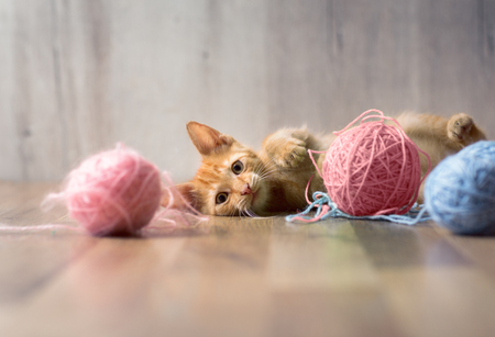 Little striped kitten in playing Stock Photo