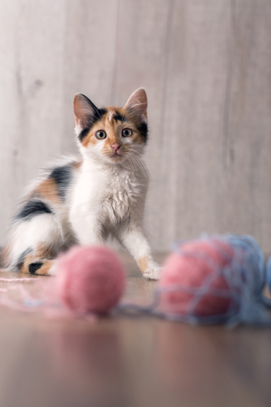 Cute pussy playing with ball of  wool