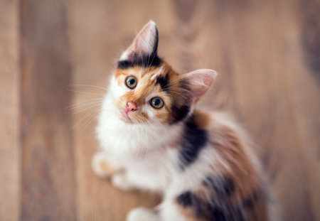 Young little cat looking up in camera