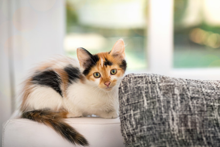 little cute kitten cat on the window in house