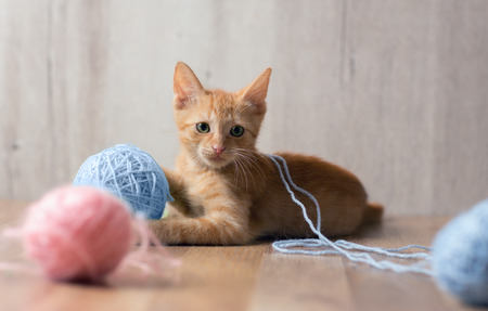 Cute red kitten playing with colorful ball of  wool