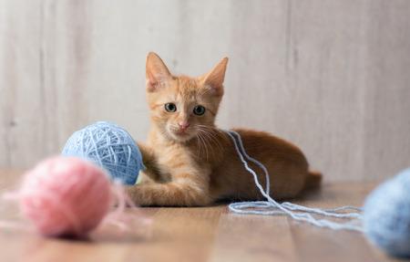 Nettes rotes Kätzchen, das mit buntem Wollball spielt