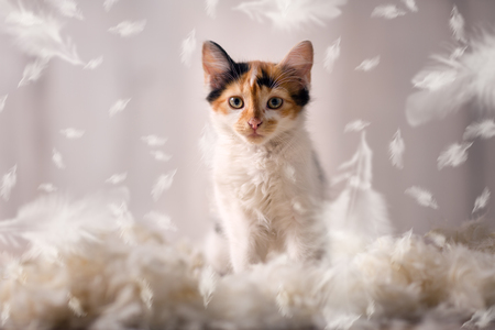 Cute pussy setting in feathers, playing time
