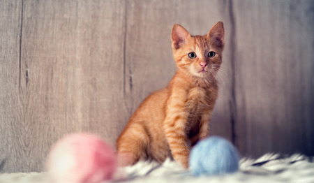 playing little cat, domestic animal Stock Photo