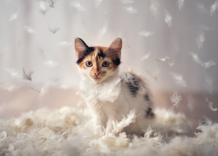 beautiful kitten plays in a cloud of feathers Stock Photo