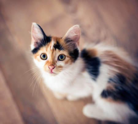 Cute little cat playing top view