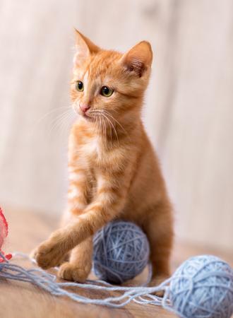 Cute orange kitten playing with wool