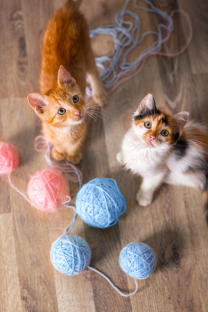 two kittens playing with ball of wool
