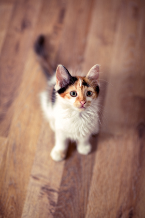 Animal portrait, young little cat looking up