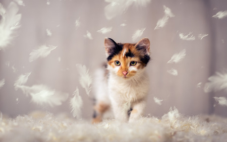Little cat playing with  feathers
