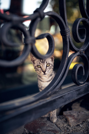 beautiful cute tabby cat stays on fence