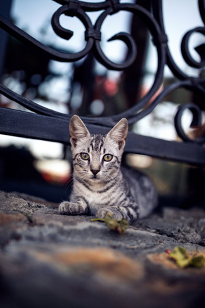 striped cat laying on stone floor near a fence with a lattice background Stock Photo