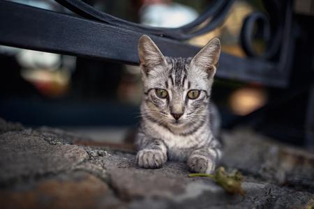 beautiful bright striped street cat laying near a fence