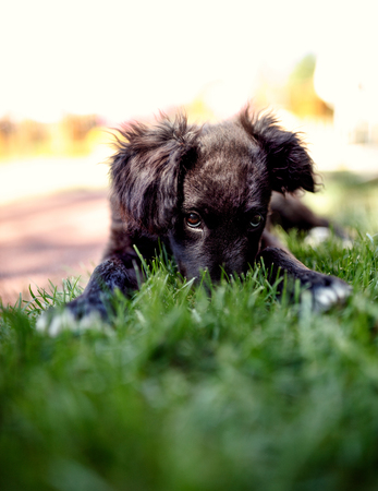 Cute black puppy in the yard on green grass