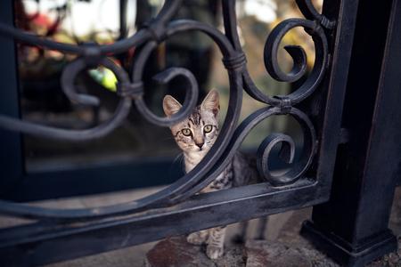 Fluffy cute tabby cat stays on fence