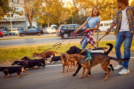 Paseador de perros pareja profesional con perros disfrutando de caminar al aire libre.