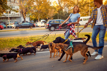 professional couple dog walker with dogs enjoying in walk outdoors. Archivio Fotografico