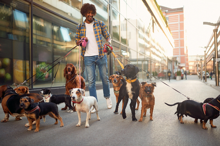 Smiling professional dog walker man in the street with lots of dogs Imagens