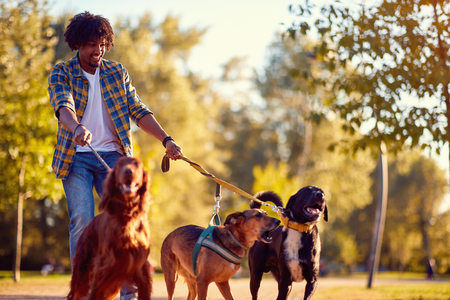 Promenade de chiens - Happy man dog walker appréciant avec des chiens