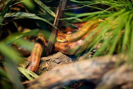 snake at a terrarium in a zoo